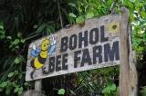 Article published on Travelhoppers — 'Buzzin' inBohol'